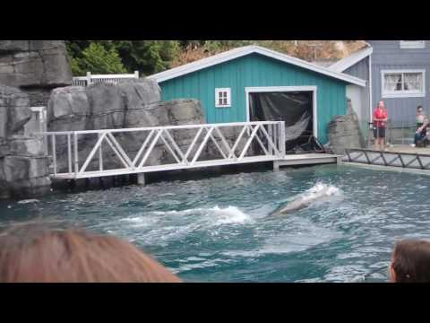 Steller Sea Lion Show @ Vancouver Aquarium