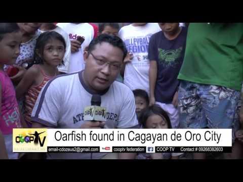 OARFISH  FOUND IN CAGAYAN DE ORO