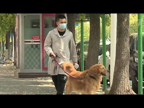 Положительная динамика в борьбе с коронавирусом в Китае, другие страны закрывают границы.