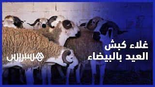 المليح كاين والثمن زايد.. غلاء الأعلاف يلهب أسعار أضاحي العيد بالمغرب