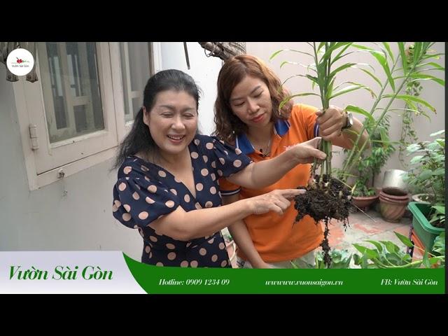 Cùng nghệ sỹ Thanh Thủy làm vườn mùa Covid