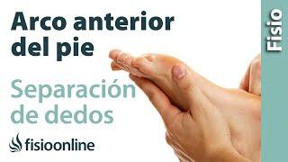 Separación de dedos y ensanchamiento del arco anterior del pie.