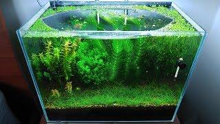 9 Months Update - (Saving Amano Larvae) NO filter, NO CO2, NO Ferts 5 Gallon Nano Tank