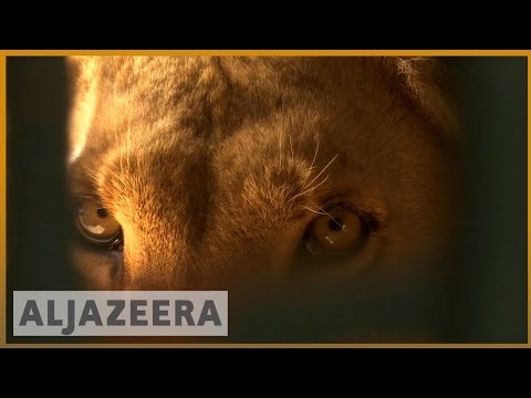 ???????? Animals saved from war: Several species find peace in Jordan