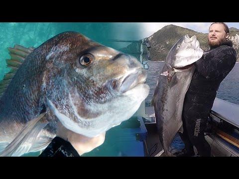 SPEARFISHING - The Hauraki Gulf - New Zealand