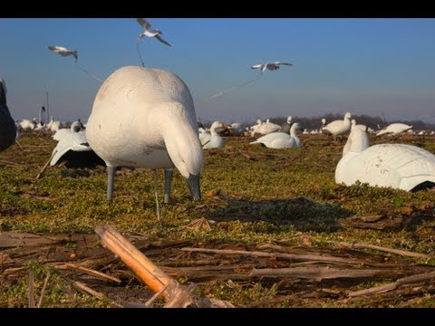 Snow Goose Hunting: Decoys And Blind Concealment