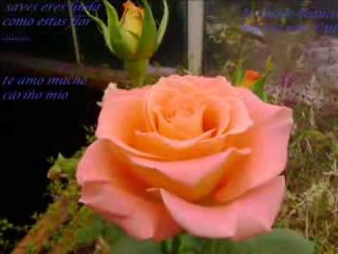el milagro de amor (jessica sarango)