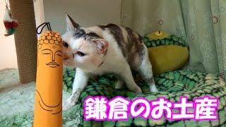 鎌倉で買った猫さんへのお土産 Souvenirs for cats bought in Kamakura