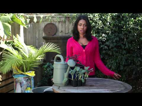 How to Prepare a Large Pot for a Container Garden : Around the Garden
