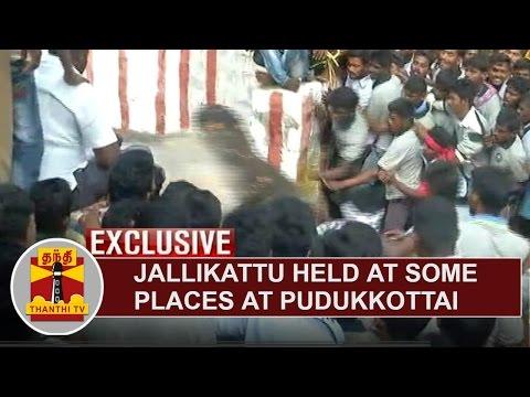 EXCLUSIVE | Jallikattu held in some places at Pudukkottai | Thanthi TV