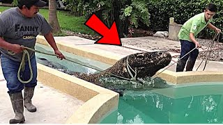 5 CRAZIEST Pets People Actually Own! | Trend Dive