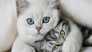 Самые смешные кошки. Хит парад 2013. Часть 3. Самое смешное видео про кошек.