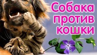 Бои без правил, собака против кошки