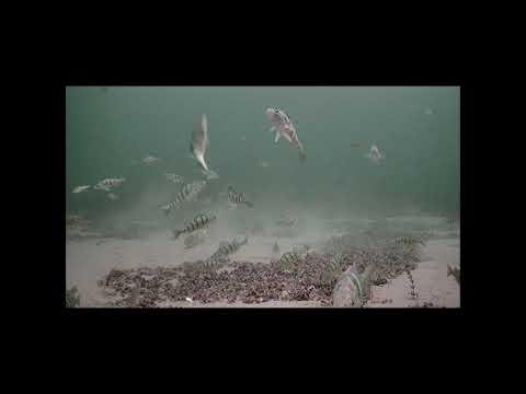 January 9.  Cooks Bay Lake Simcoe