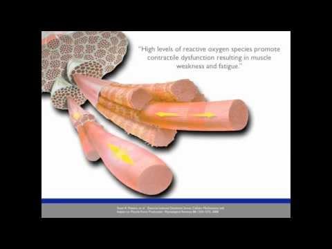 David Phillips MD - Oxidative Stress & Athletic Performance