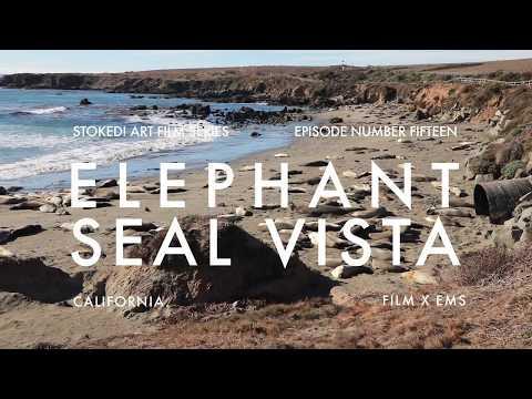 ELEPHANT SEAL VISTA  : STOKED! ART FILMS # 15