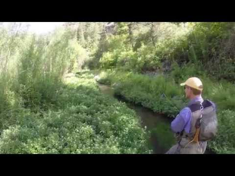 Bonneville Cutthroat Trout Fly Fishing