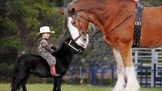 The BIG Horse!!!