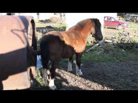 Приколы с лошадьми