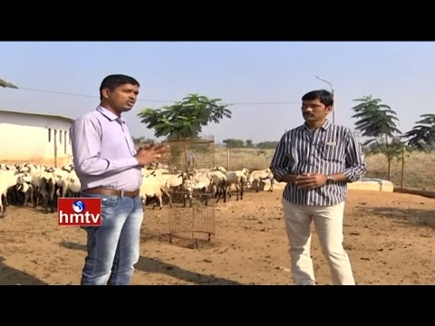 Success Story of 'Intensive Goat Farming' | Tips by Purnachandra Reddy | Nela Talli | HMTV