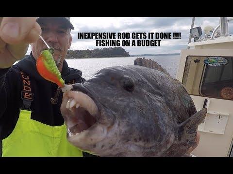 BLACKFISH TAUTOG ROD ON A BUDGET + NICE FISH !!