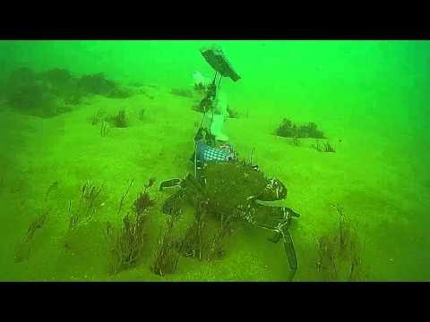 Norfolk sea bed cam