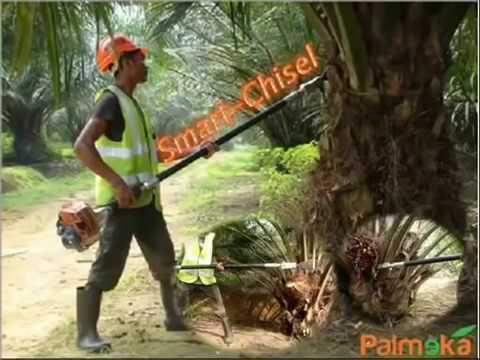 Mesin canggih untuk pemanen kelapa sawit - YouTube
