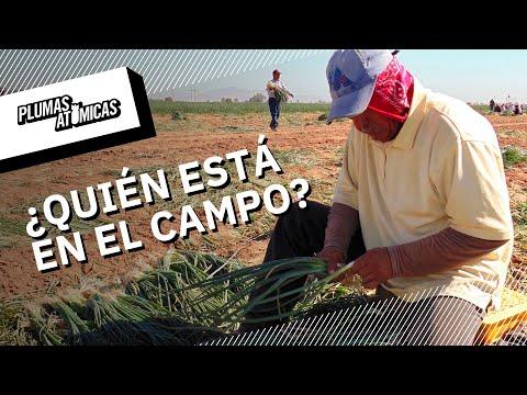 ¿Quién cosecha durante la pandemia?: jornaleras agrícolas, indefensas ante coronavirus