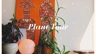 MY HOUSE PLANT COLLECTION - How to not kill your plants! | Hel…