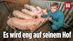 Tönnies-Zulieferer weiß nicht, wohin mit seinen Schweinen