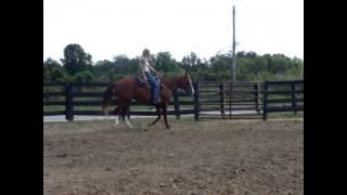SORREL QUARTER HORSE GELDING
