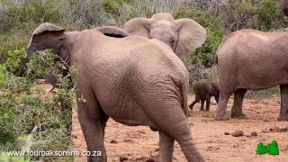 Bad Tempered Elephant Hits Baby Twice! Listen how the baby screams