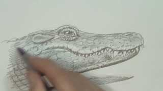 Speed Video, Alligator Drawing