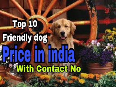 Top 10 Friendly dogs Price in india   contact no in discription.