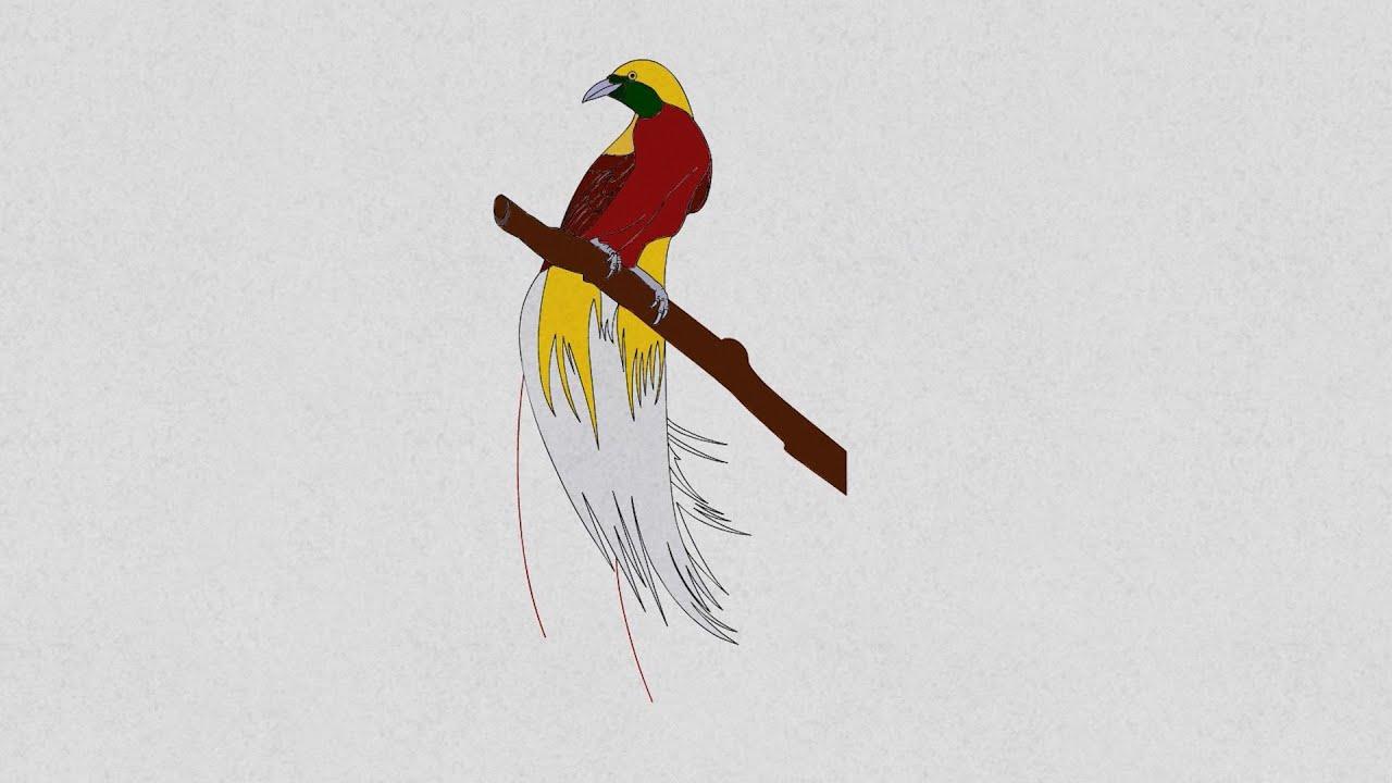 Cara menggambar dan mewarnai burung cendrawasih. How to draw and color a bird of paradise.Lanzi ...