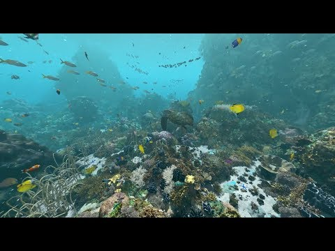 Expedition Reef: Behind the Scenes | California Academy of Sciences