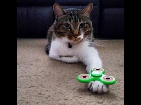 CAT LOVES FIDGET SPINNER!