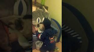 Кошка ненавидит бэтмена! !!!!