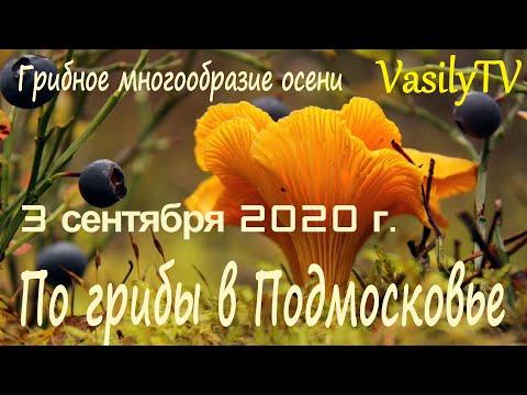 По грибы в Подмосковье 3 сентября 2020 г. Грибное многообразие осени