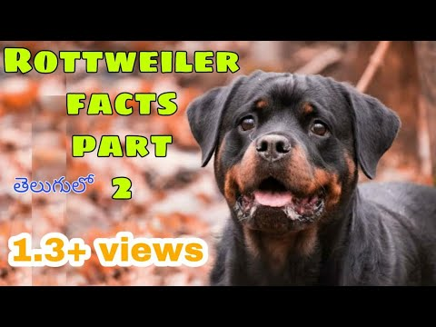 rottweiler-dog-facts-in-telugu-|-part-2-in-telugu-|-most-popular-breed-dog