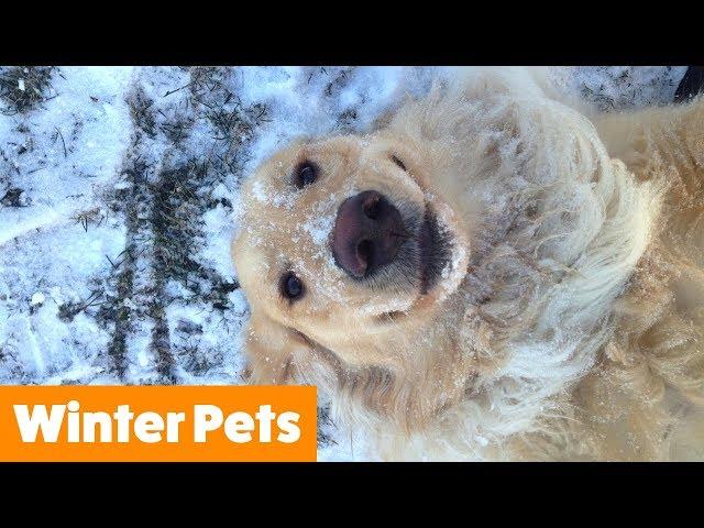 Funniest Winter Animals | Funny Pet Videos