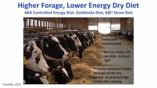 Feeding Lower Energy Diets to Transition Dairy Cows