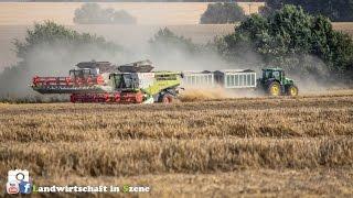 Weizen dreschen 4 Lexion 770 & John Deere 7530+ Ackermann Zweiachshänger thumbnail