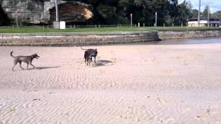 My Dogs Gone Walking