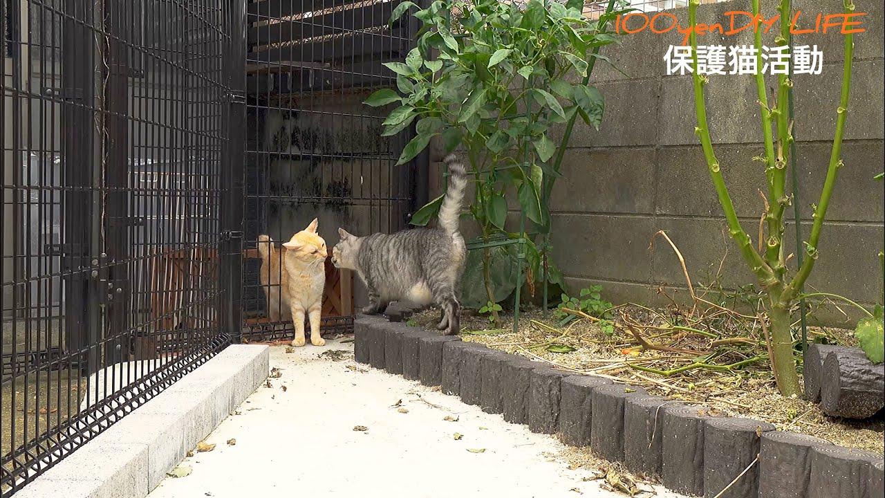 自由に外で遊べるキャットガーデンをDIY。恐る恐る出てくる猫ちゃんが可愛すぎましたwww|保護猫活動