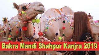 Bakra Mandi Shahpur Kanjra 2019 | Eid-ul-Adha | Sana Amjad