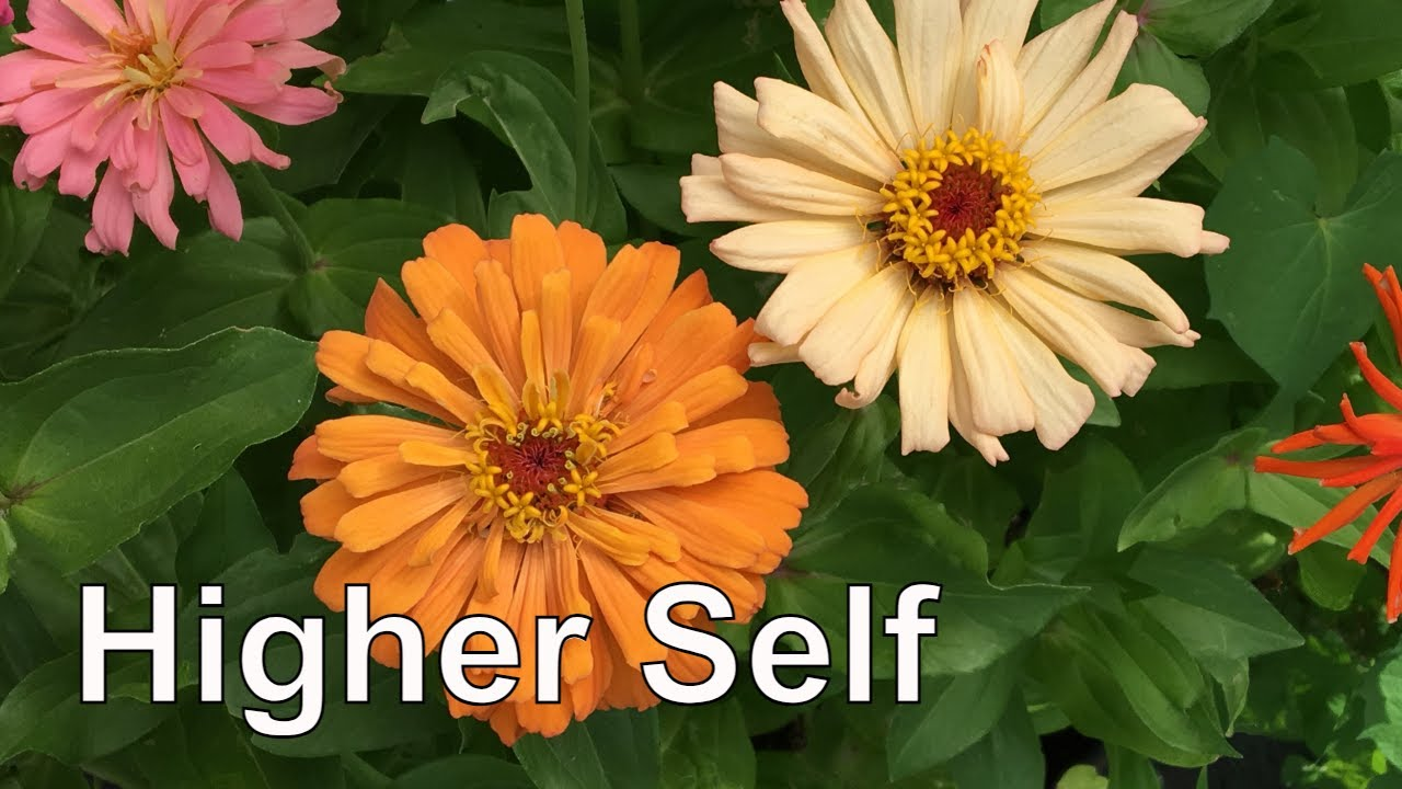 Guided Meditation: Meeting Your Higher Self - 15 Minutes ...