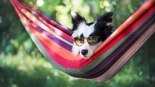Забавные животные 2017 | Просто умилительное видео