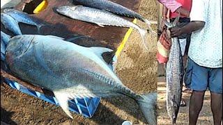 காசிமேடு மீன் மார்கெட் kasimedu fish market fish