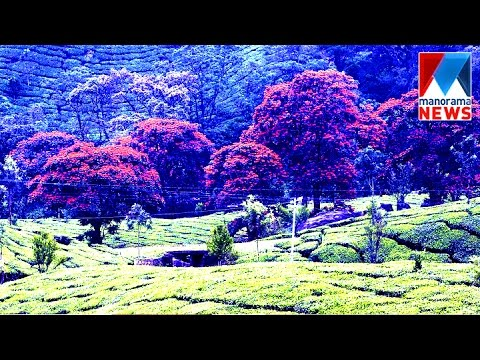 An incredible scenic beauty of marayur   Manorama News